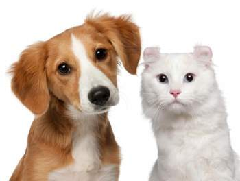 Pet Insurance Products
